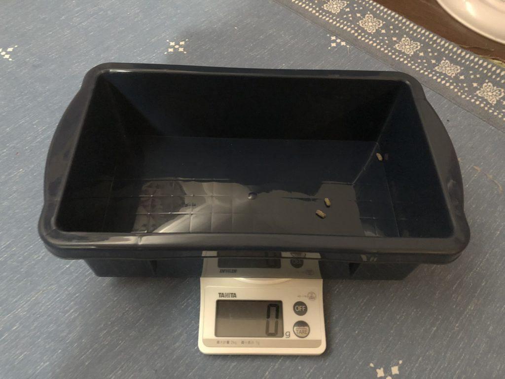 ネザーランドドワーフの体重測定2